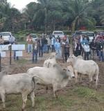 7º dia campo Fazenda Segredo