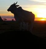 Pôr do sol na Fazenda Segredo